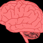 Brain Awareness: How To Improve Brain Health